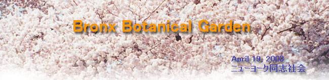 花見   Bronx Botanical Garden